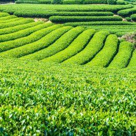 fortalecer seu agronegócio